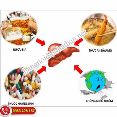 Gan nhiễm độc do nhiều nguyên nhân