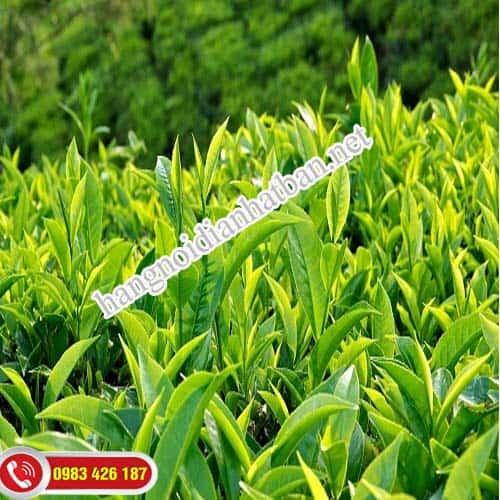 Thành phần của sữa rửa mặt trà xanh Shirochasou Green Tea